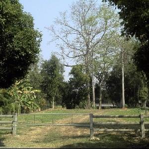 รหัส 555 ขายที่ดินแปลงสวย